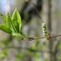 Весны прекрасные моменты... :: ТАТЬЯНА (tatik)