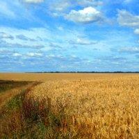Русское поле. :: оля san-alondra