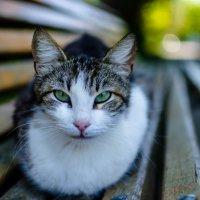 Перспективная котейка :: Андрей Володин