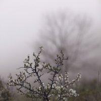 Новая весна :: Константин Николаенко