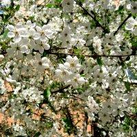 С Первомаем! Весны, мира, счастья! :: Елена Семигина