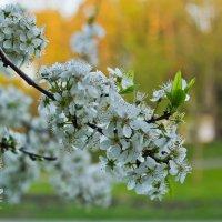 Весна !!!!!!!!!! :: Светлана З