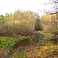 Лес после дождя :: Андрей Снегерёв