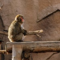 солнечные ванны. Ижевский зоопарк :: Svetlana Plasentsiia