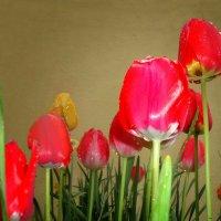 Апрельский дождь… Он соткан весь из счастья.. :: Galina Dzubina