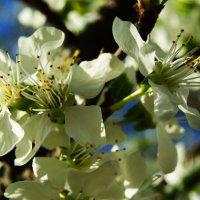 Весна :: Galina Belugina