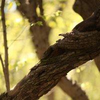 Дерево друида :: Константин Николаенко