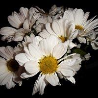 Хризантемы,мои хризантемы...! :: Наталья