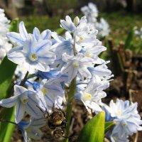 Весна и насекомые :: Наталия ***