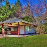 Цветение сакуры в Японском саду :: Анна Букина