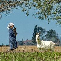 Пастушка :: Валерий Талашов