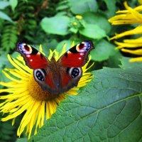 Цветок неба :: Андрей Снегерёв