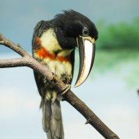 Птицы :: Надежда Абрамян