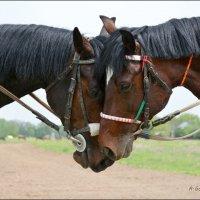 Лошадь - смелость, выносливость, преодоление трудностей и понимание. :: Anna Gornostayeva