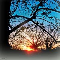 Вечерние кружева заката... :: Юрий Владимирович