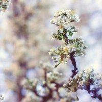 весна :: Александра Охрименко