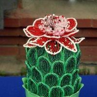 Цветущий кактус. :: nadyasilyuk Вознюк