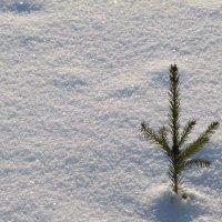 Снег :: Валентина Дмитровская