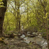 В весеннем лесу :: Константин Николаенко