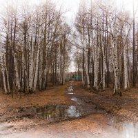 Старая дорога весной. :: Сергей Щелкунов