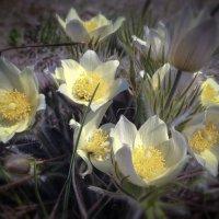 Цветов весны букет. :: Сергей Адигамов