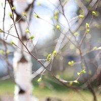 весна в деревне :: Эльмира Суворова