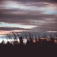 закат :: Олька Никулочкина