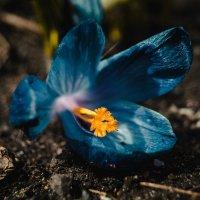 Цветок :: Анжелика Фотограф