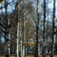 Золотая осень :: shvlad