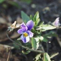 Миленький цветочек :: Света Кондрашова