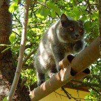 На охоту за птичкой :: Светлана Гуагова