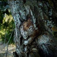 Лесные чудеса :: Валерий Талашов