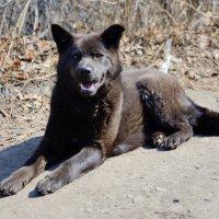 Черный пес :: Anatolyi Usynin