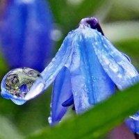 Весны цветы. Когда цветы весною плачут... :: Александр Резуненко