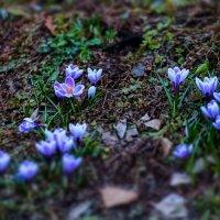 весна 2015 :: Владимир Фурман
