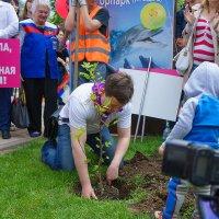 Свадебный парад 2015, Краснодар, Посадка тюльпанного дерева :: Анна Хрипачева