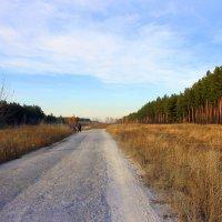 Здравствуйте, сосновые леса! :: Валентина ツ ღ✿ღ
