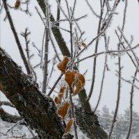 Замёрзшие. :: Андрий Майковский