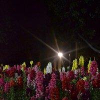 Цветы ночью :: Ирина Дыкина