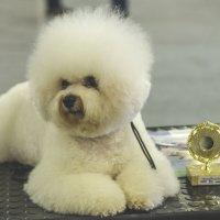 Выставка собак :: Игорь Максименко