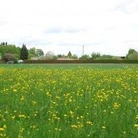 Цветение весны :: Galina Dzubina