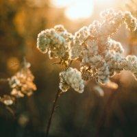 Классика на закате. :: Артемий Кошелев
