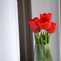 Люблю сочетание красного с белым :: Румянушка @