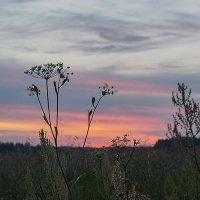 Летний закат :: Елена Linfoto