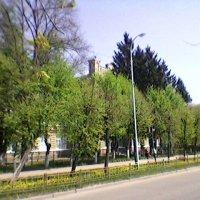 В городе весна! :: Миша Любчик