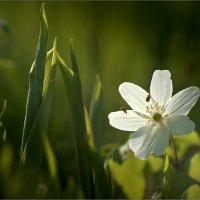 Хокку о двух жуках, слетевшихся к цветку... :: Михаил Дрейке