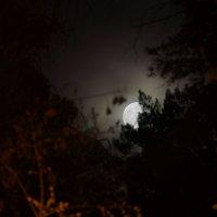 ночь в лесу :: Михаил Фролов