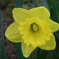Жёлтый... :: мария п