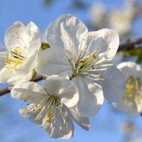 Весна :: Маргарита Орловская