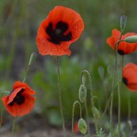 цветение степи :: Алена Рыжова